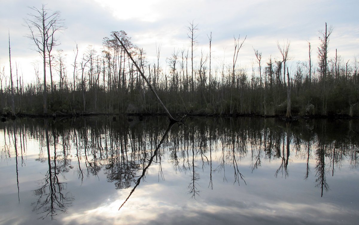 More Swamp, ICW, North Carolina