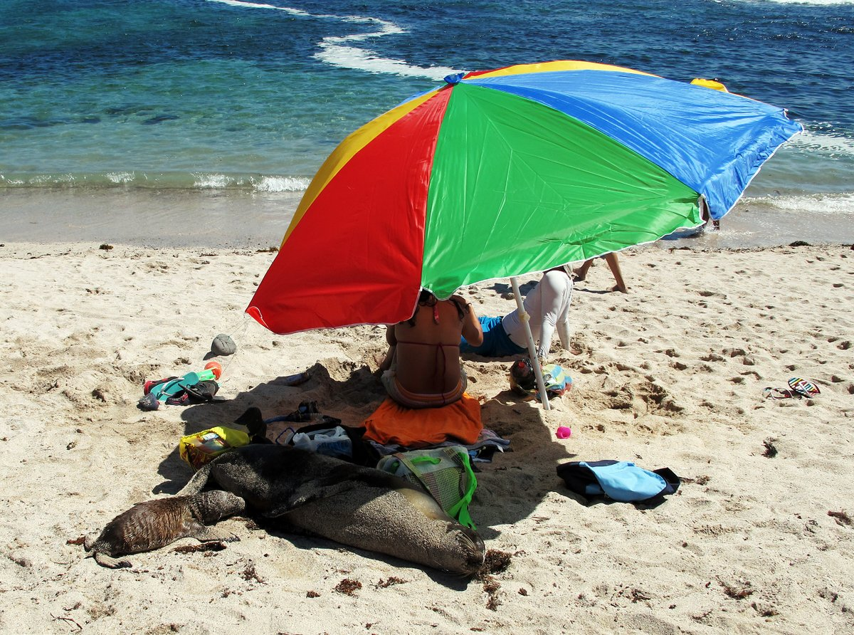Sea Lion and cub sharing a beach umbrella