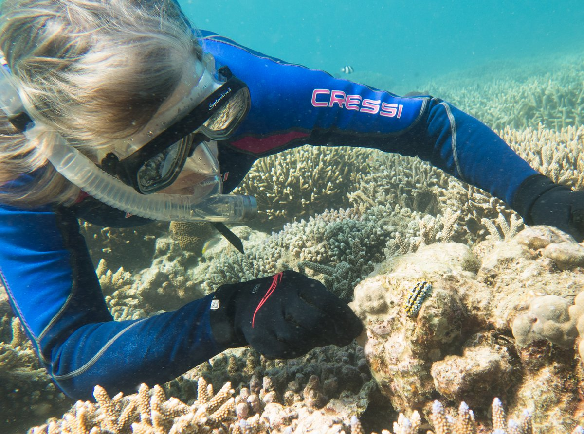 Glenys looking at a Nudibranch