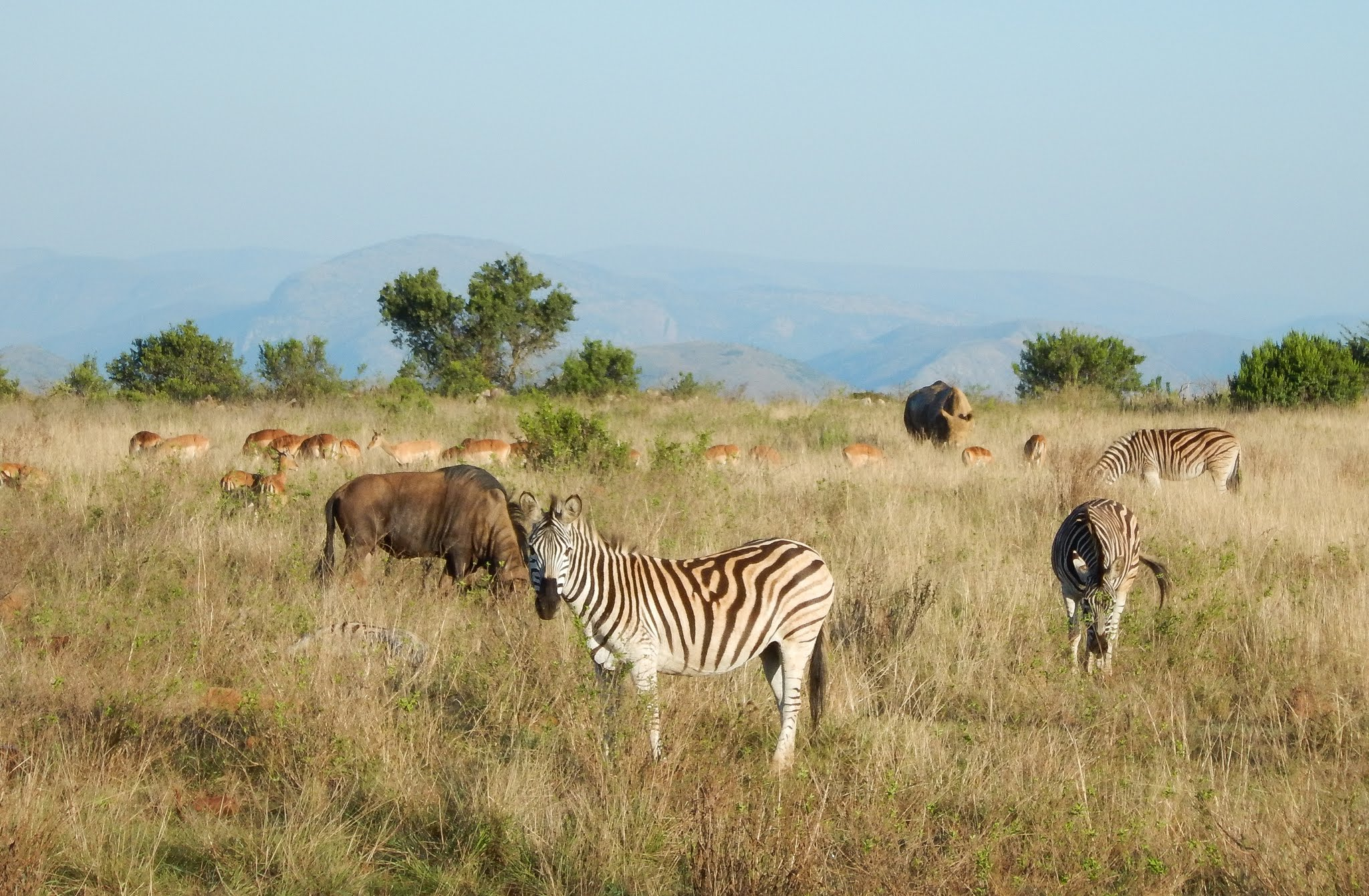 African Game Reserve